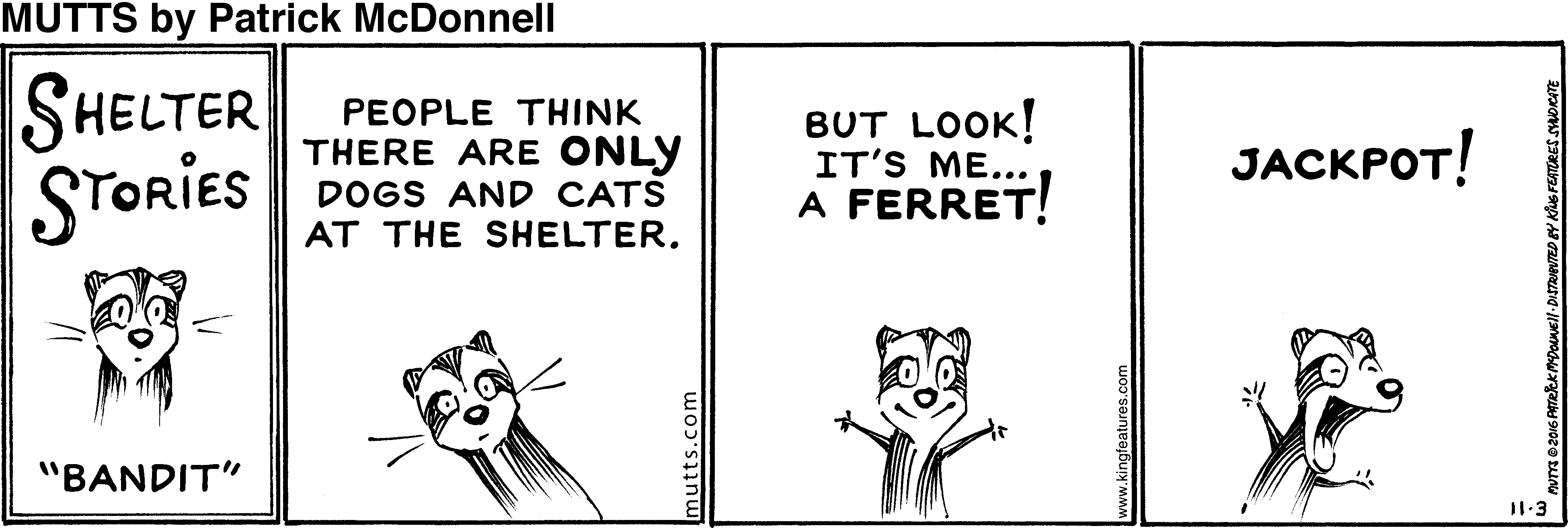 Mutts Cartoon about ferrets in shelters